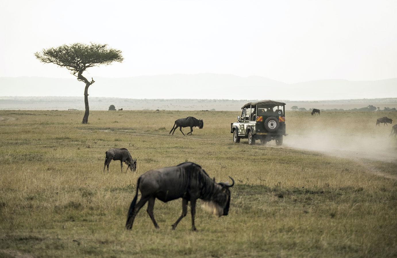 Safari Masai Mara in Kenia, Rondreis in Afrika | Mira Tours – Reisbureau Haacht