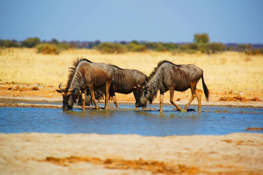 Botswana, Rondreis in Afrika | Mira Tours – Reisbureau Haacht