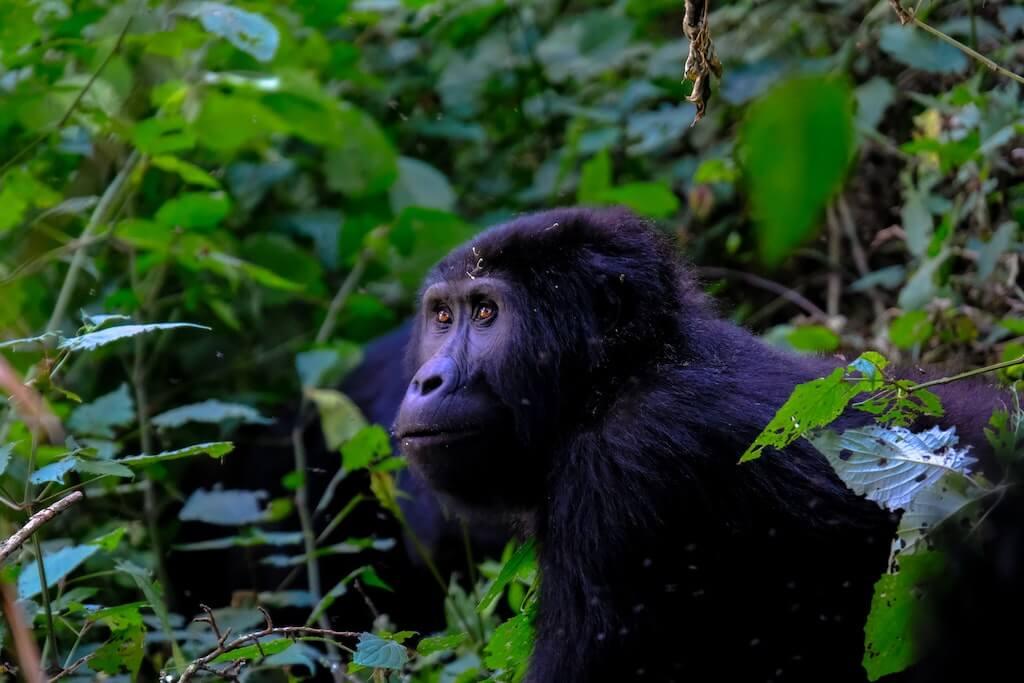 Oeganda, Rondreis in Afrika | Mira Tours – Reisbureau Haacht